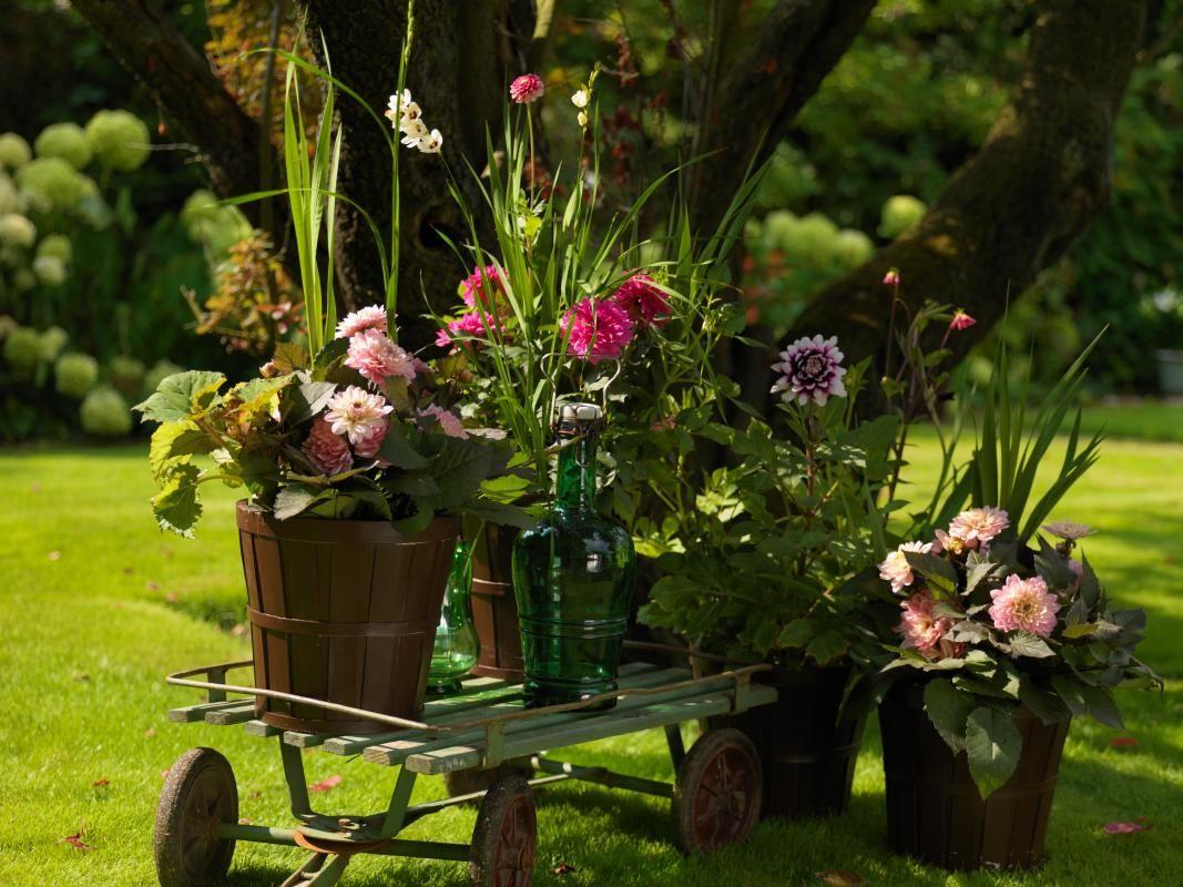 Che Cosa Sono I Bulbi gli spettacolari bulbi estivi   fiori estivi, piantare e fiori