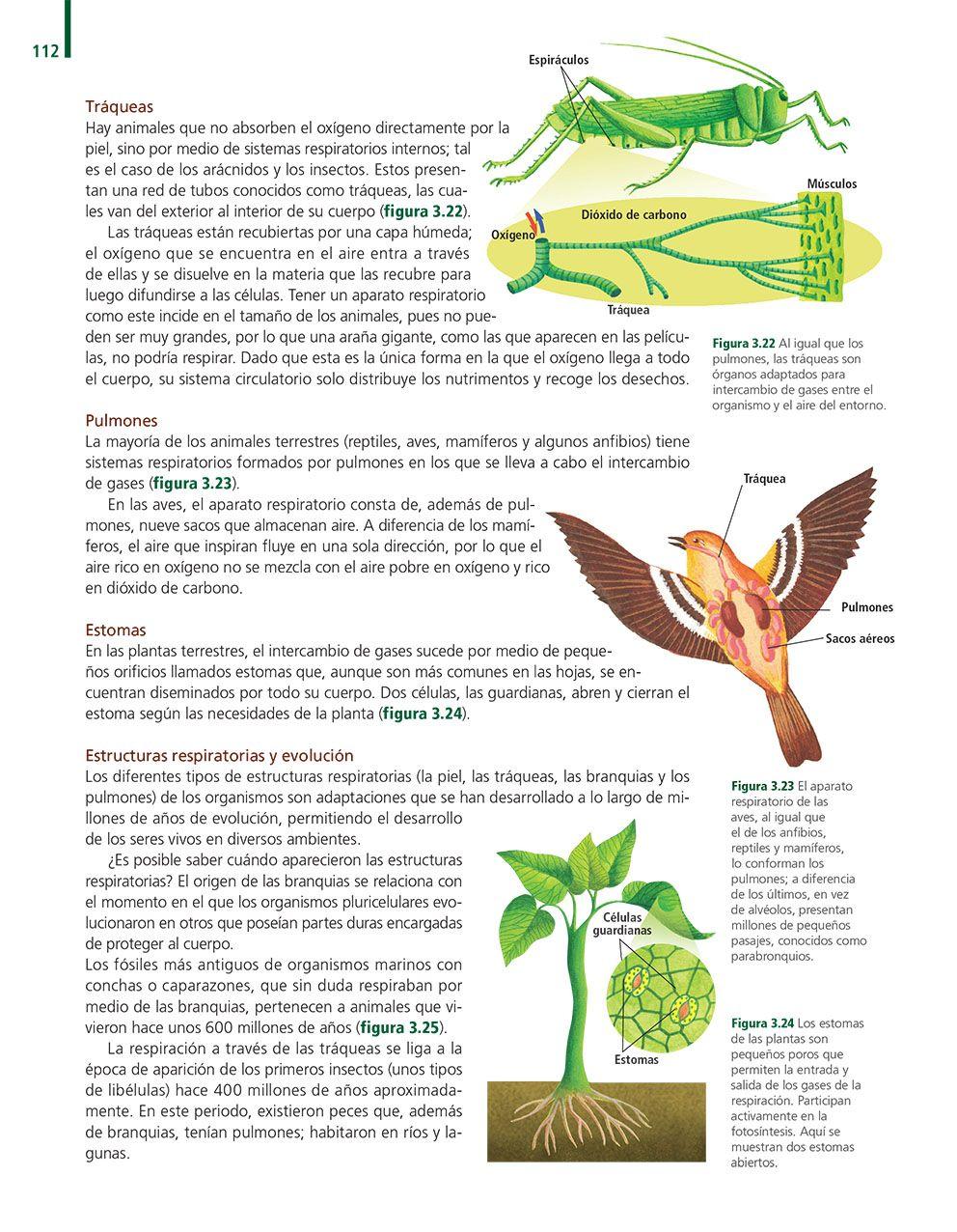 Vida, ambiente y salud. Ciencias 1 Biología: Ediciones SM