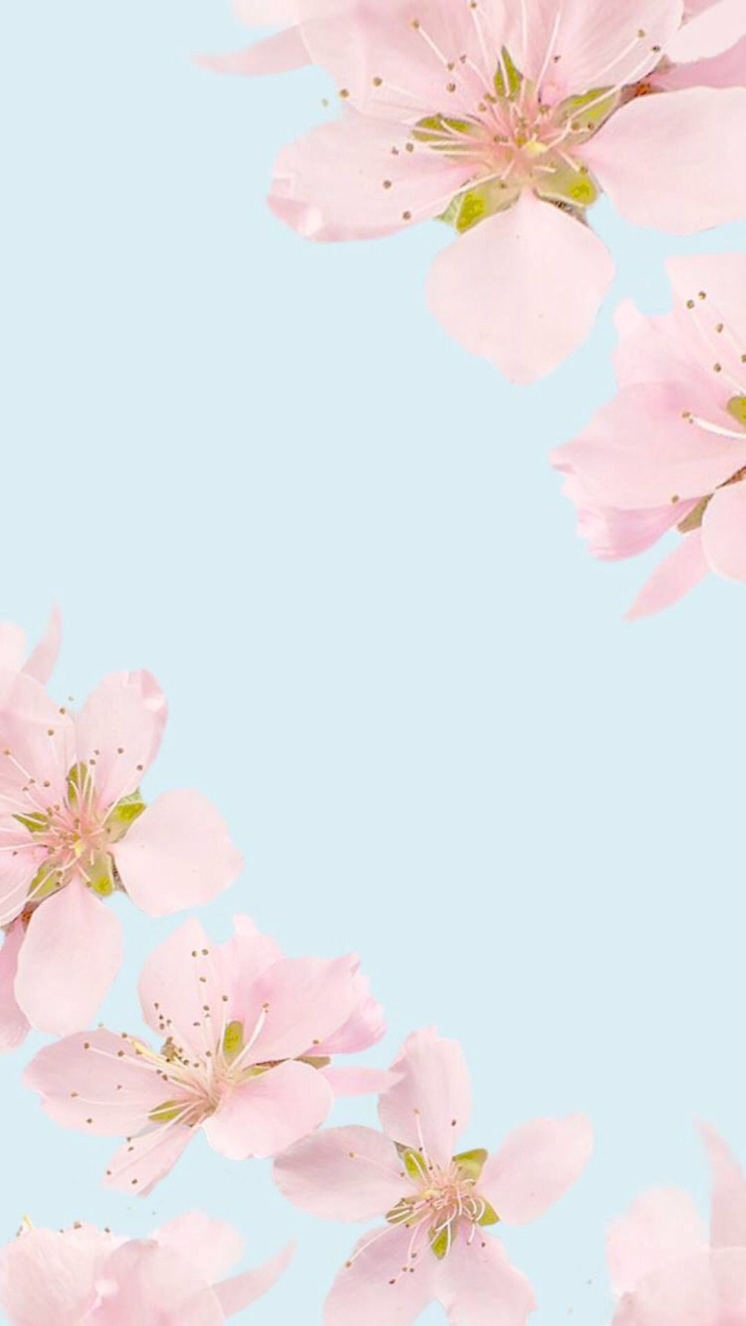 Floral Wallpaper IPhone Pink Flowers Clean Beauty Colour