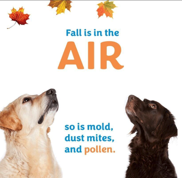 You can reduce your exposure to fall allergens by changing