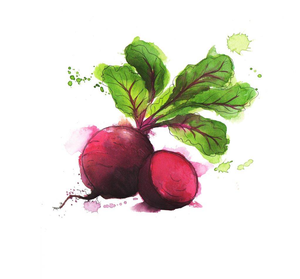 beetroot watercolour painting #illustration #drawing #art | SMAKI ... for Drawing Beetroot  59dqh