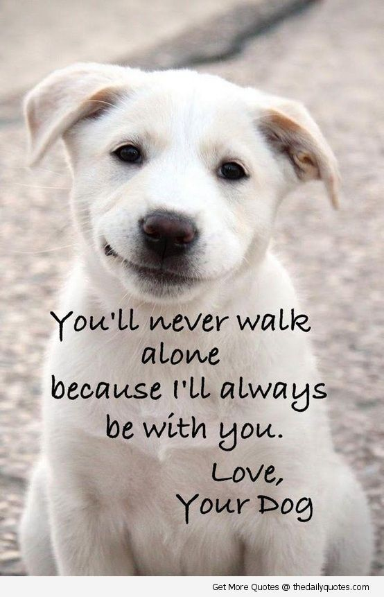 cute dog sayings quotes