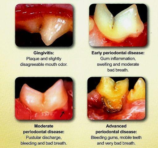Feline Dental Disease Pet dental health, Pet dental care