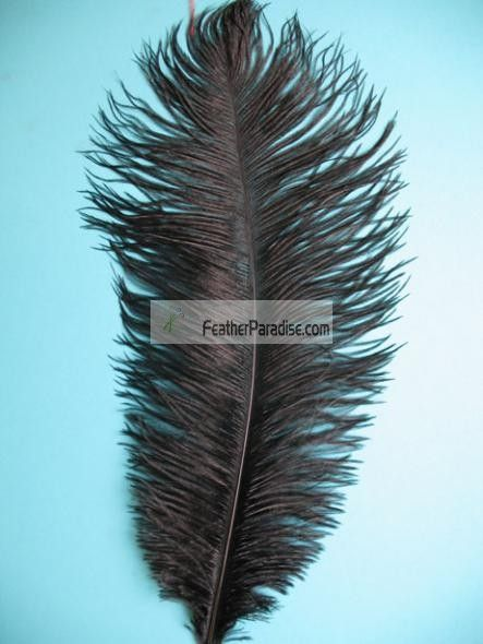 Black Ostrich Feathers 6-8 inch Sanitized and Hand-sorted 12 Pieces - bulk halloween decorations