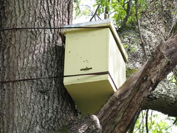 Good comments on a proper swarm trap with instructions for ...