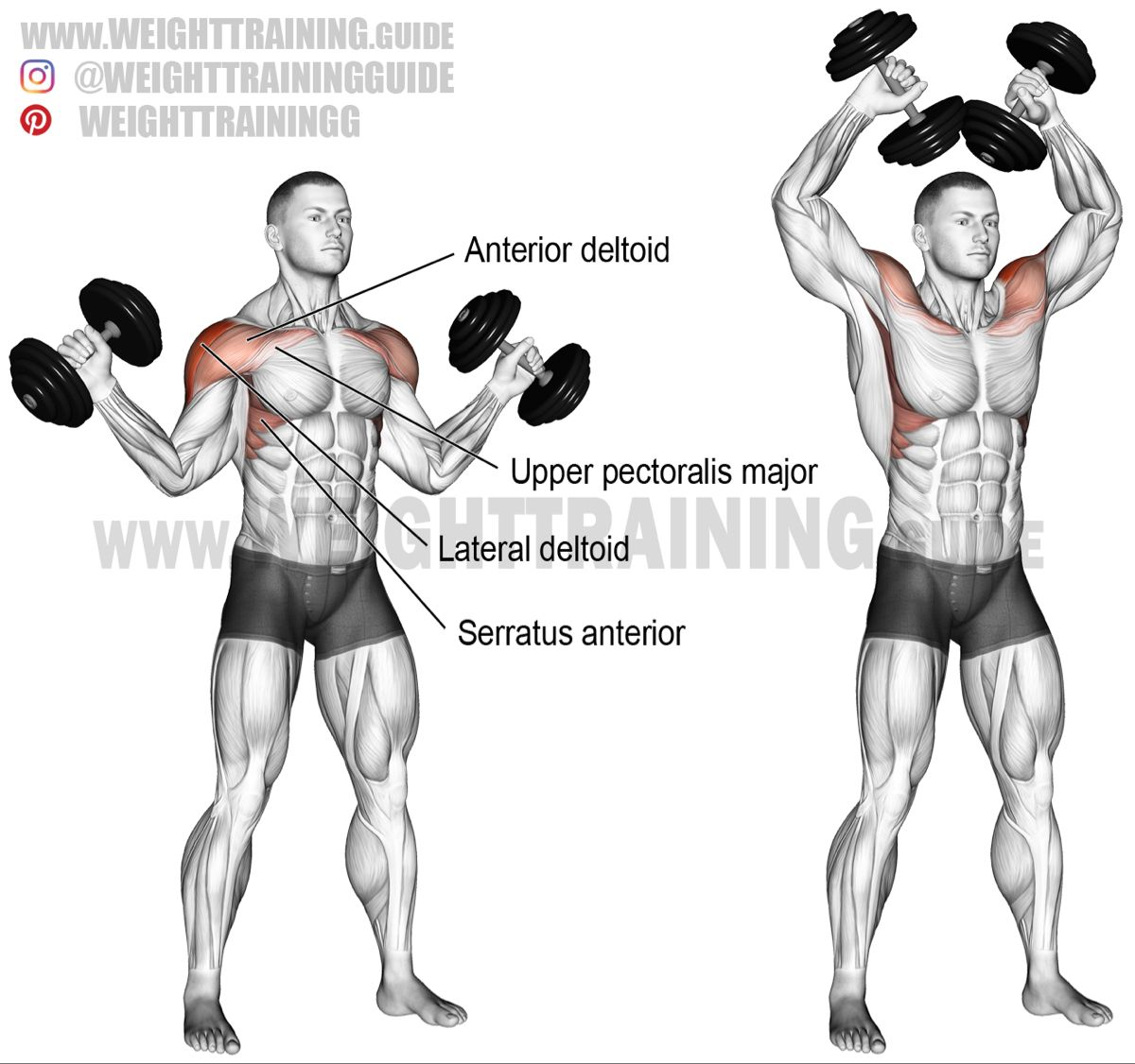 Dumbbell W Press Exercise Instructions And Video Weight Training Guide Deltoid Workout Full Body Workout Routine Shoulder Workout