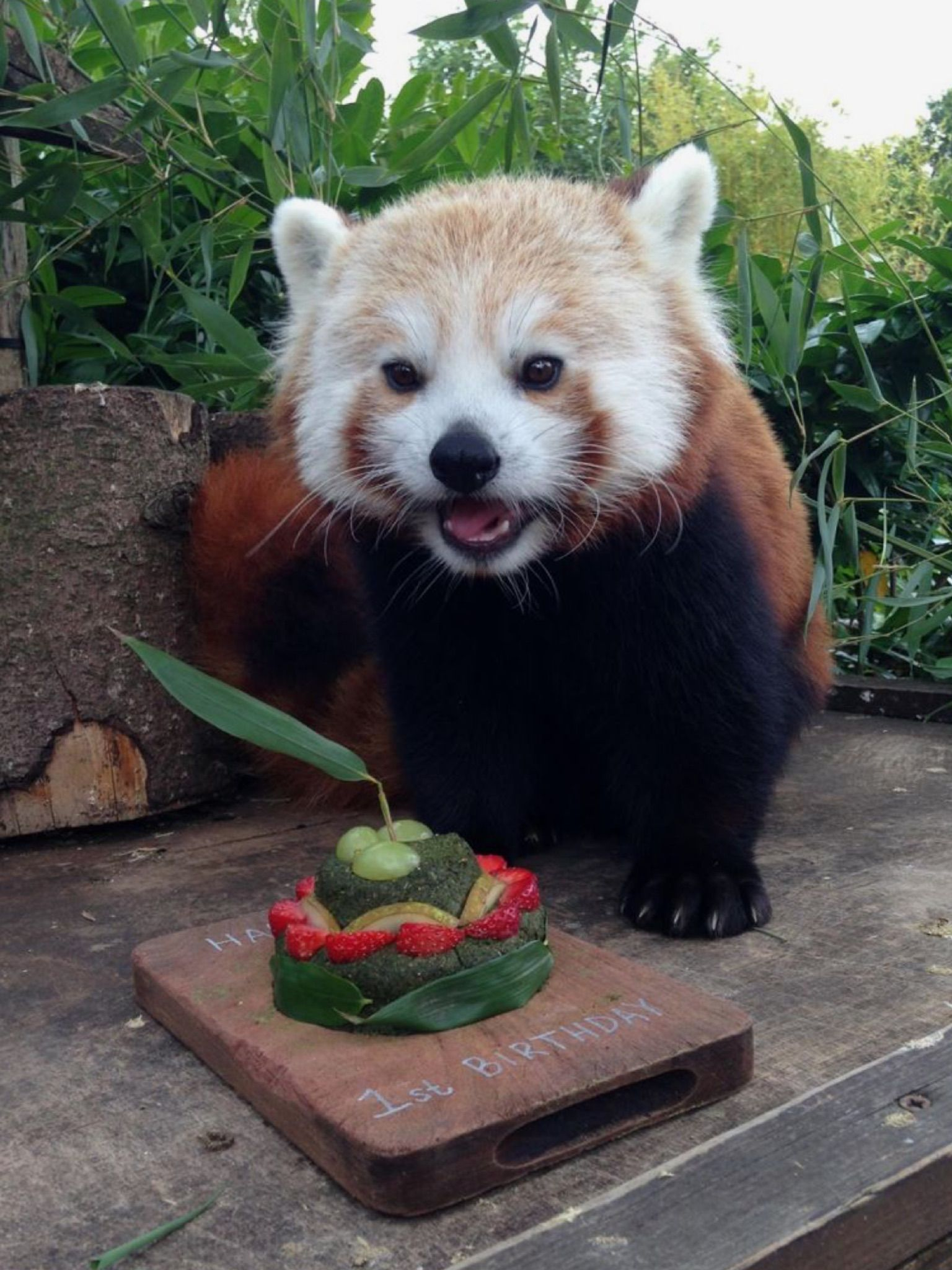 Happy Birthday To Me Red Pandas Pinterest Red Panda