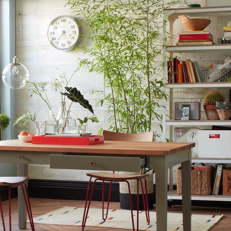 How To Grow Bamboo At Home Gardenista + west elm Home Decor - decoracion con bambu