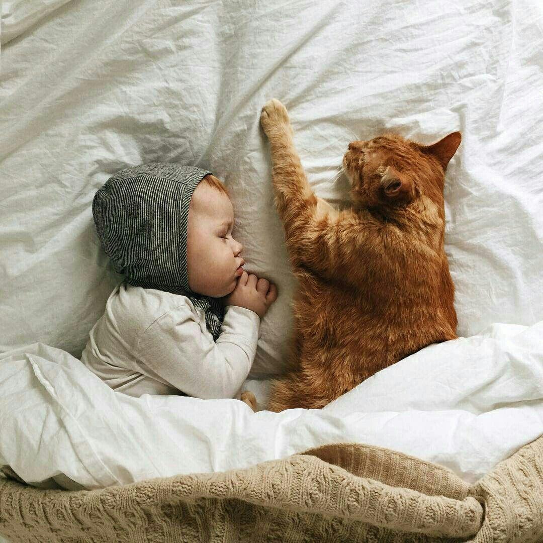 Картинки сон дети животные