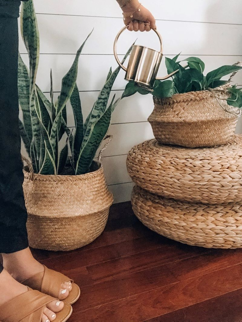 Indoor House Plants 101: An Easy Care Guide - Lulus.com Fashion Blog