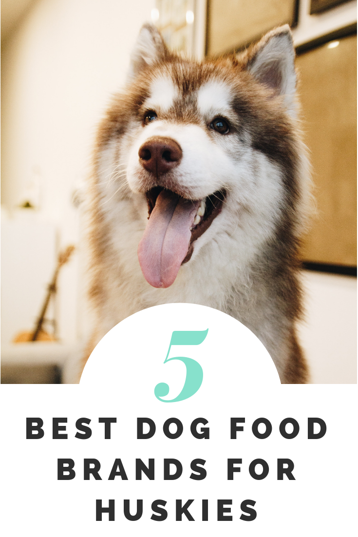 The Best Dog Food For Huskies Top 5 Brands Reviewed (With