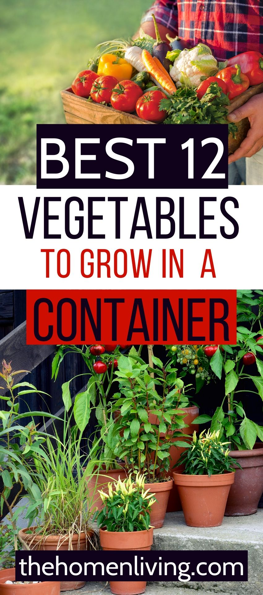 1ea7365203134fdf6333efce1f129a3f - Best Soil To Use For Container Gardening