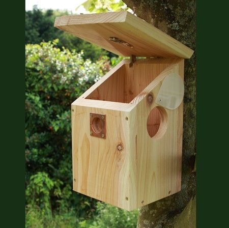 Nichoir Pour Oiseaux Avec Camera Couleur Infrarouge Et Audio Nesting Boxes Decorative Bird Houses Bird House