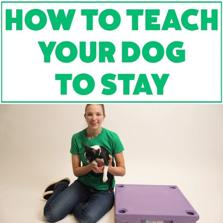 Learn How to Become a Dog Trainer With These Tips ...