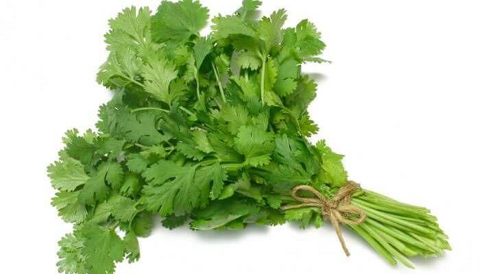 cilantro, planta medicinal
