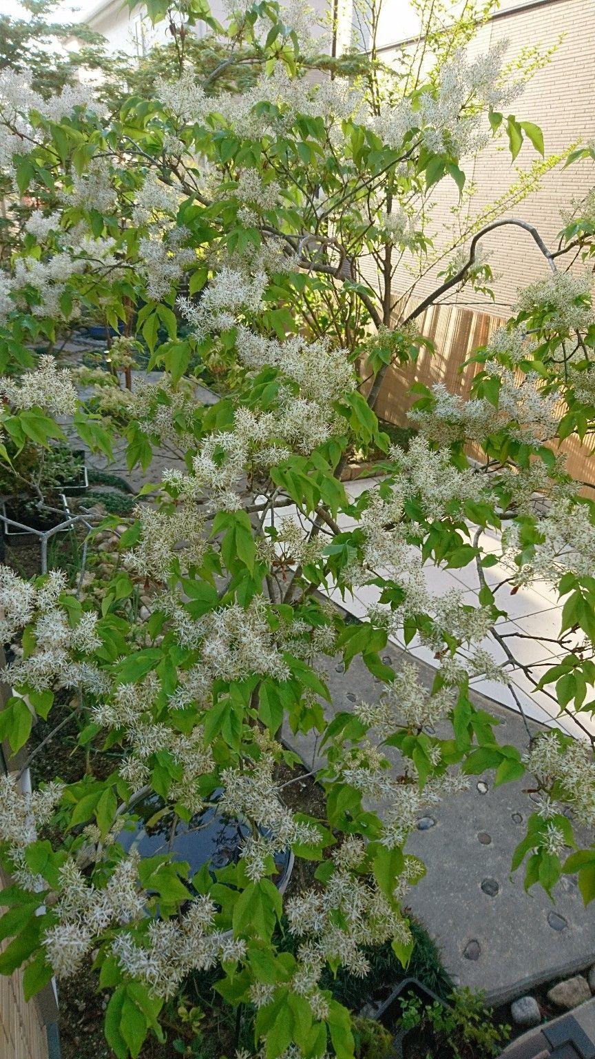ボード 雑木の庭の苗木と草花ショップ ぞう木りん のピン