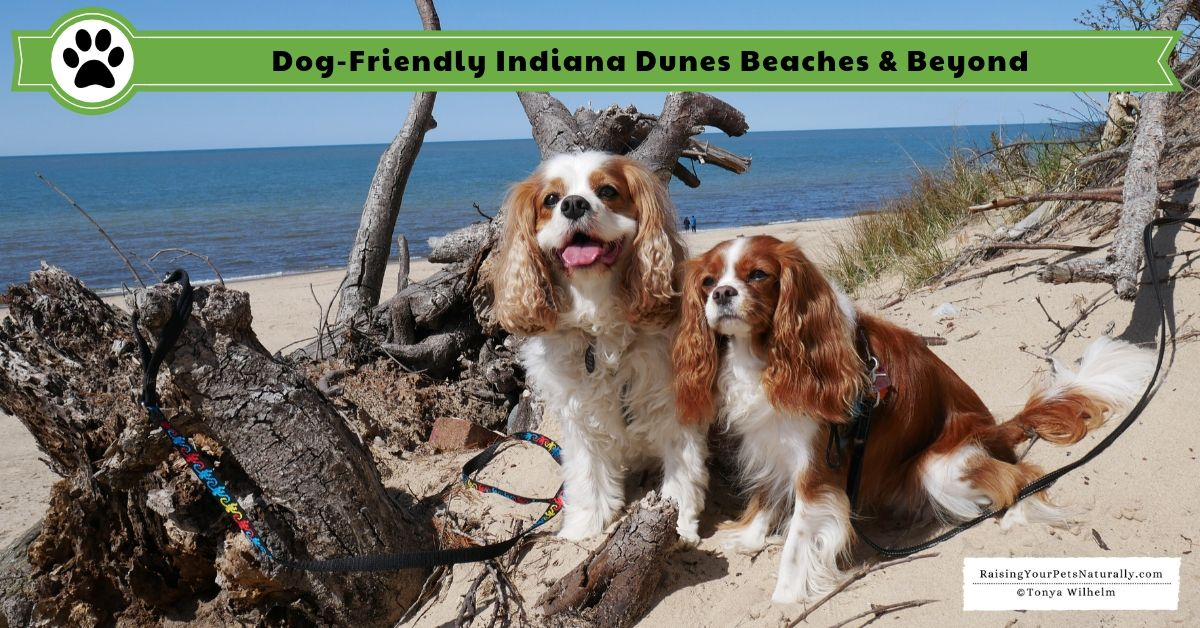 Dogfriendly indiana dunes travel guide indiana dunes