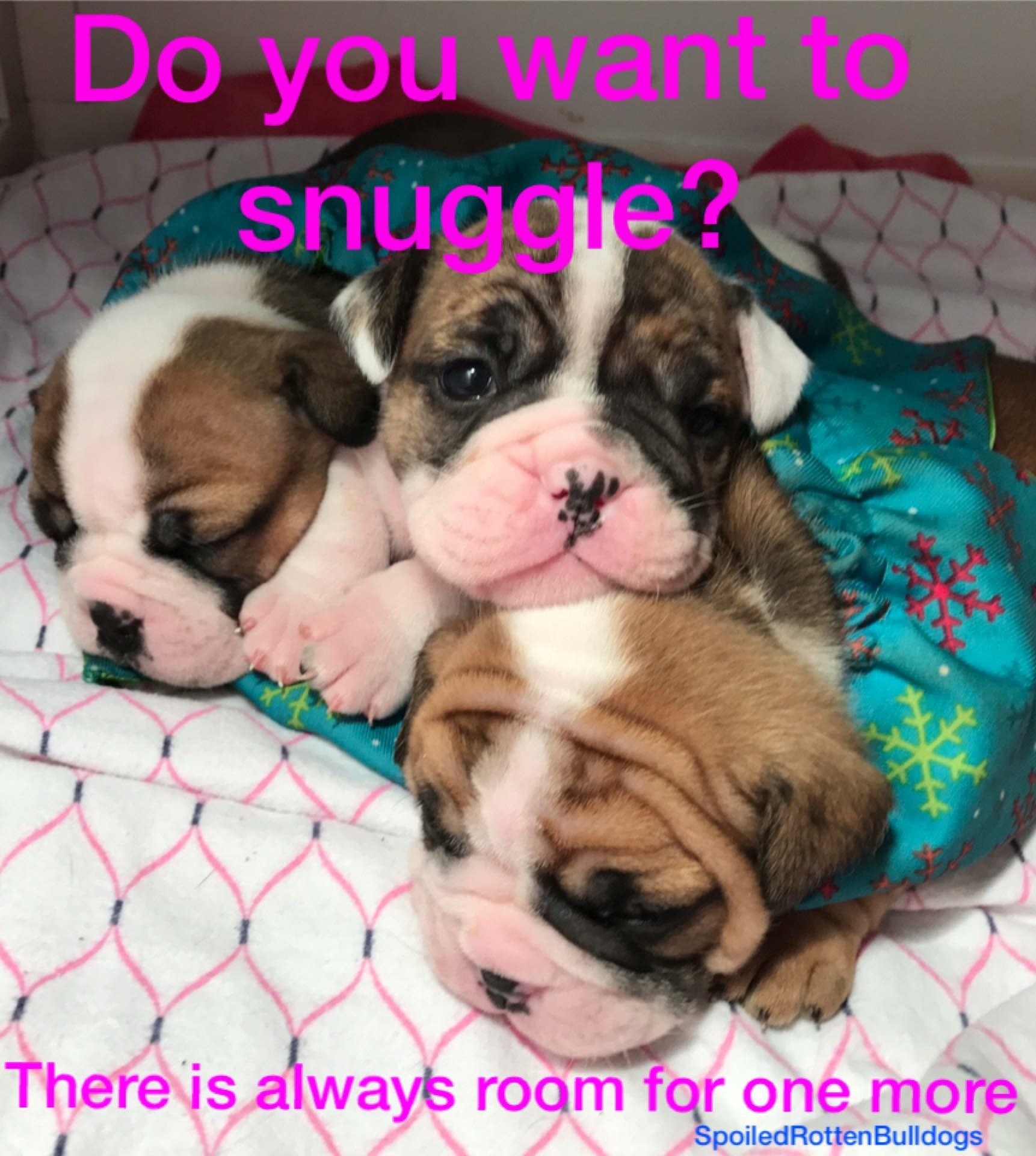 Pin By Raina Graves On Spoiled Rotten Bulldogs Bulldog French Bulldog Snuggles
