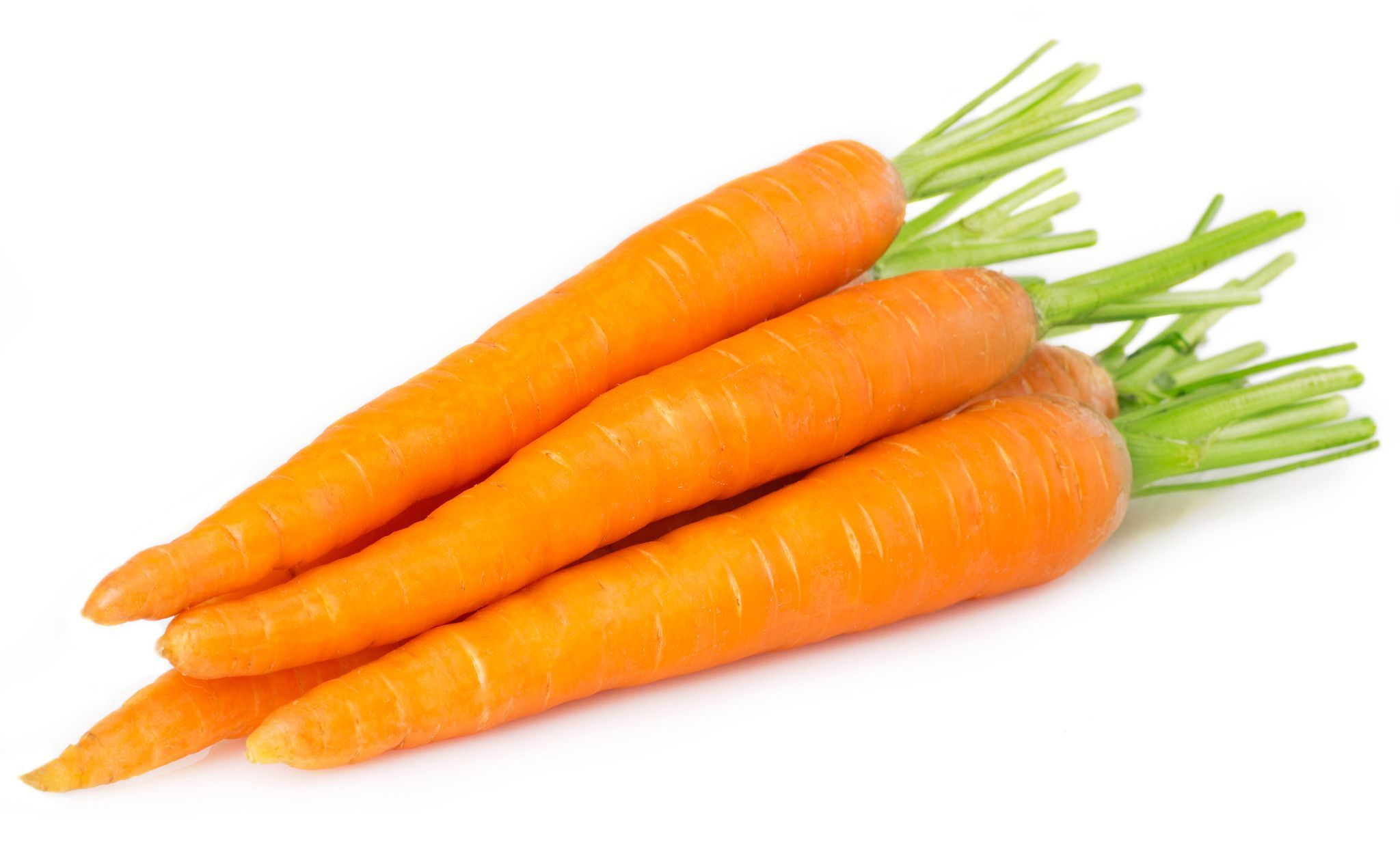 1/4 Pound of Danvers Carrot Seed Bulk Garden Seed