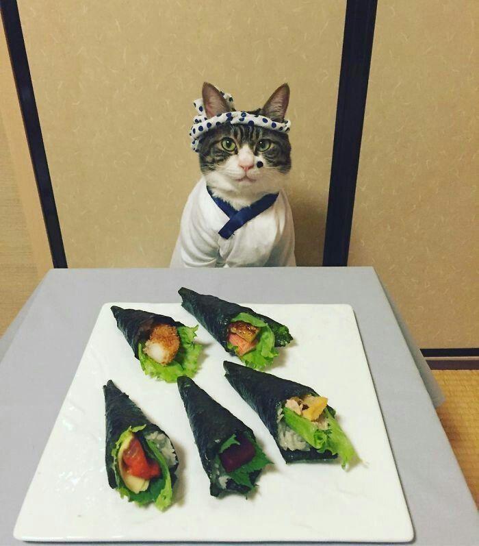 แมว おしゃれまとめの人気アイデア pinterest tonya lee キャットレディー 子猫 かわいい猫
