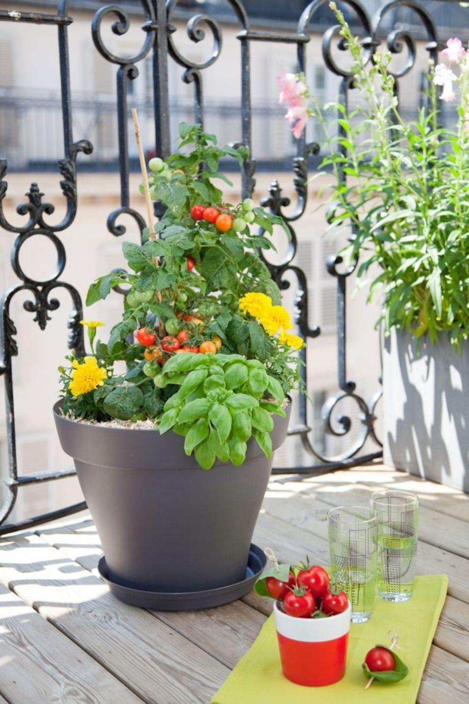 Planter Des Tomates En Pot planter des tomates cerises en pot : comment faire