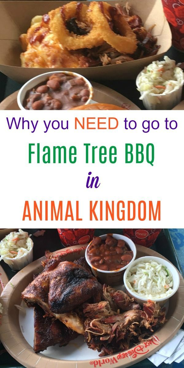 Review Of Flame Tree Bbq At Animal Kingdom Must See