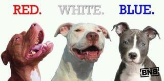 Red.White.Blue.  American Pitbull Terrier We Love You!