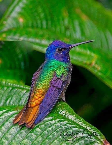 Beautiful Pajaros Hermosos Colibri Fotos Aves De Colores