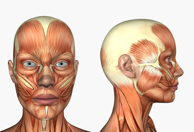 free renew me® facial exercise gym - muscles of the face | body, Cephalic Vein