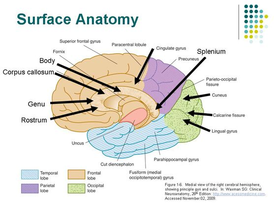 Corpus Callosum Anatomy Google Search Love Medicine Pinterest