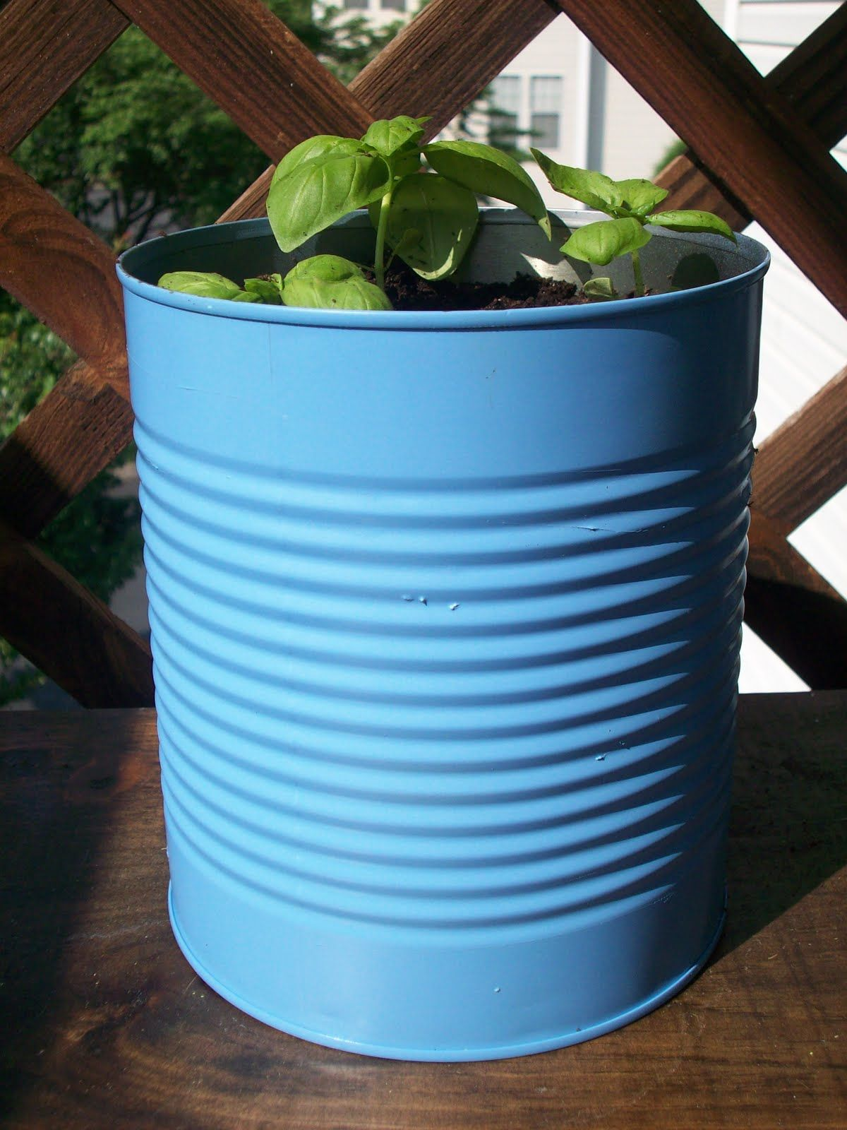 Spray paint tin cans u plant herbs for windowsill garden growing