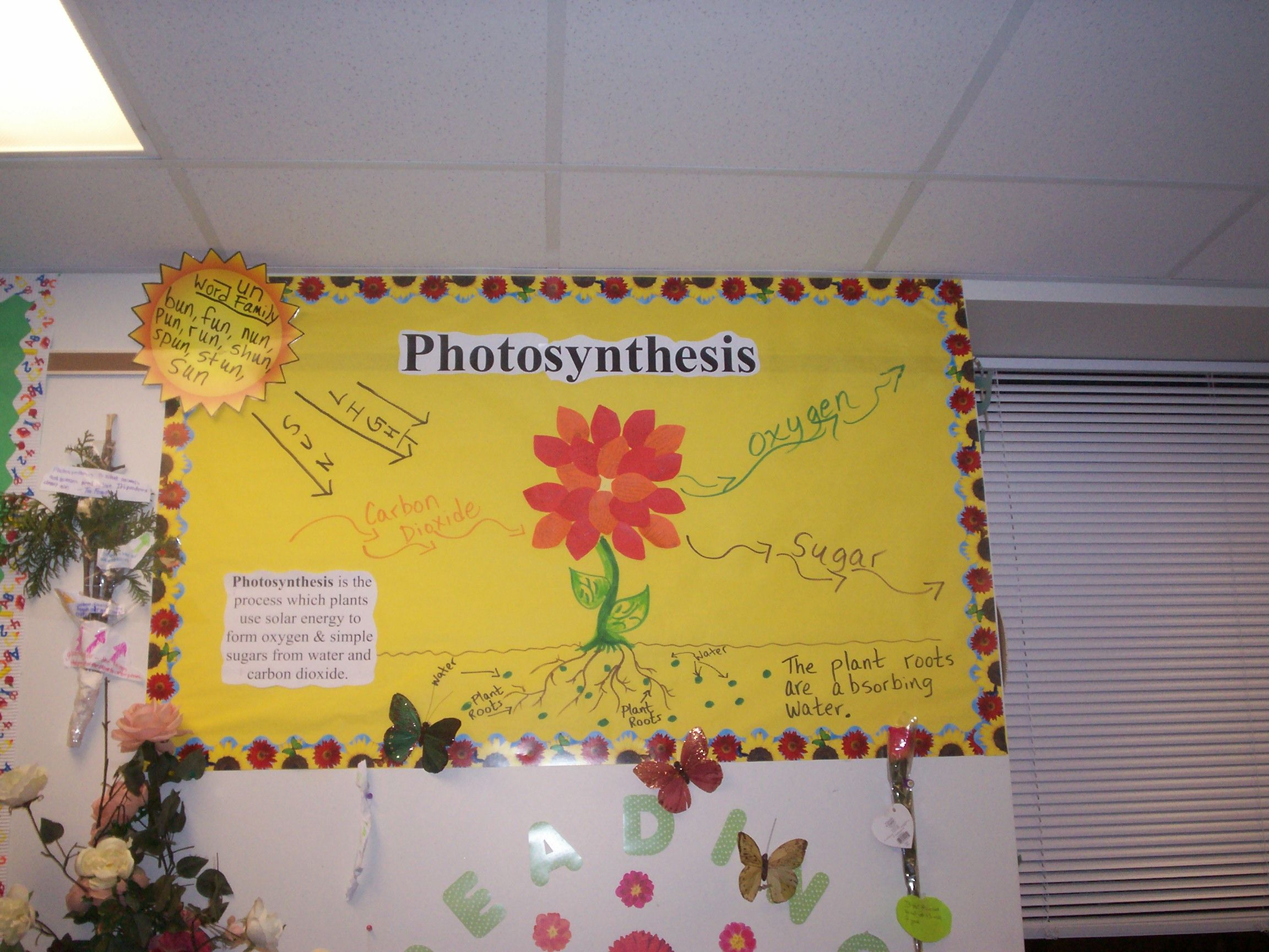 Photosynthesis Bulletin Board Idea Classroom