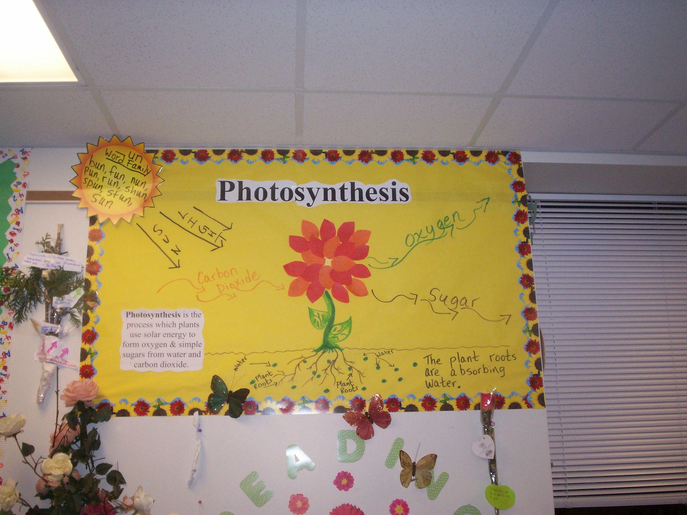 Photosynthesis bulletin board idea. classroom Middle