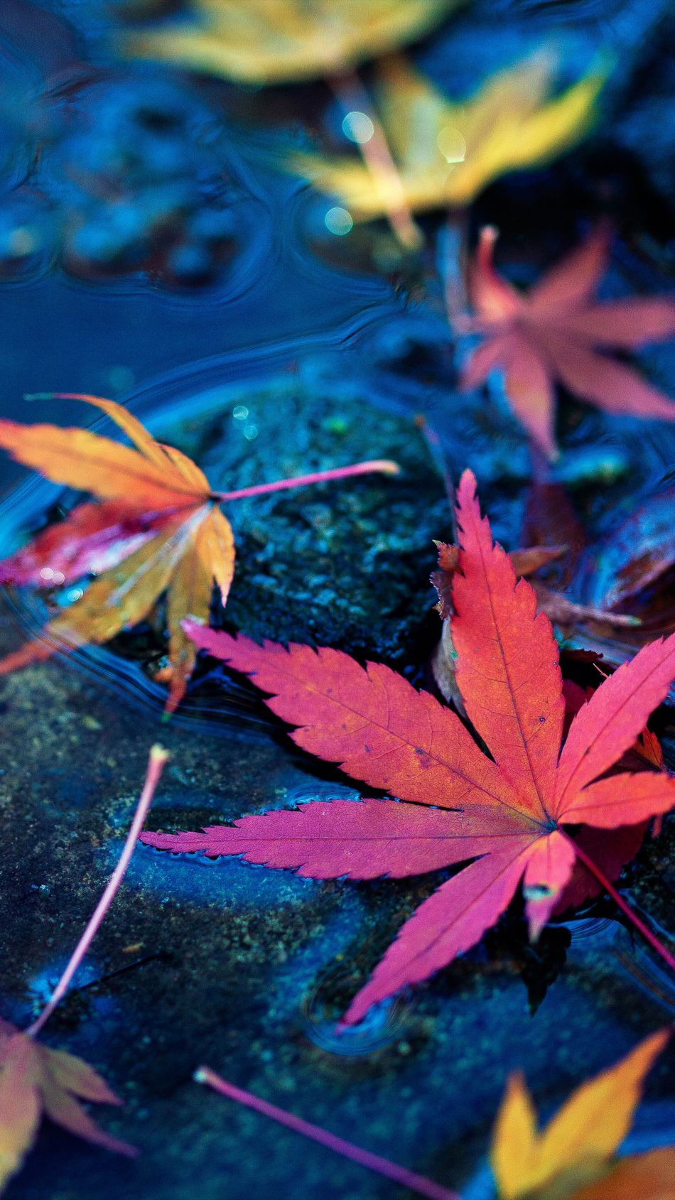 Maple Leaves Fall Autumn Water 4k Ultra Hd Mobile Wallpaper Fall Wallpaper Hd Flower Wallpaper Fall Pictures Nature