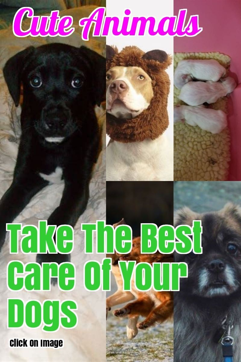 Have A Question About Dogs We Ll Answer It Pet Care Dogs Dog Care Tips