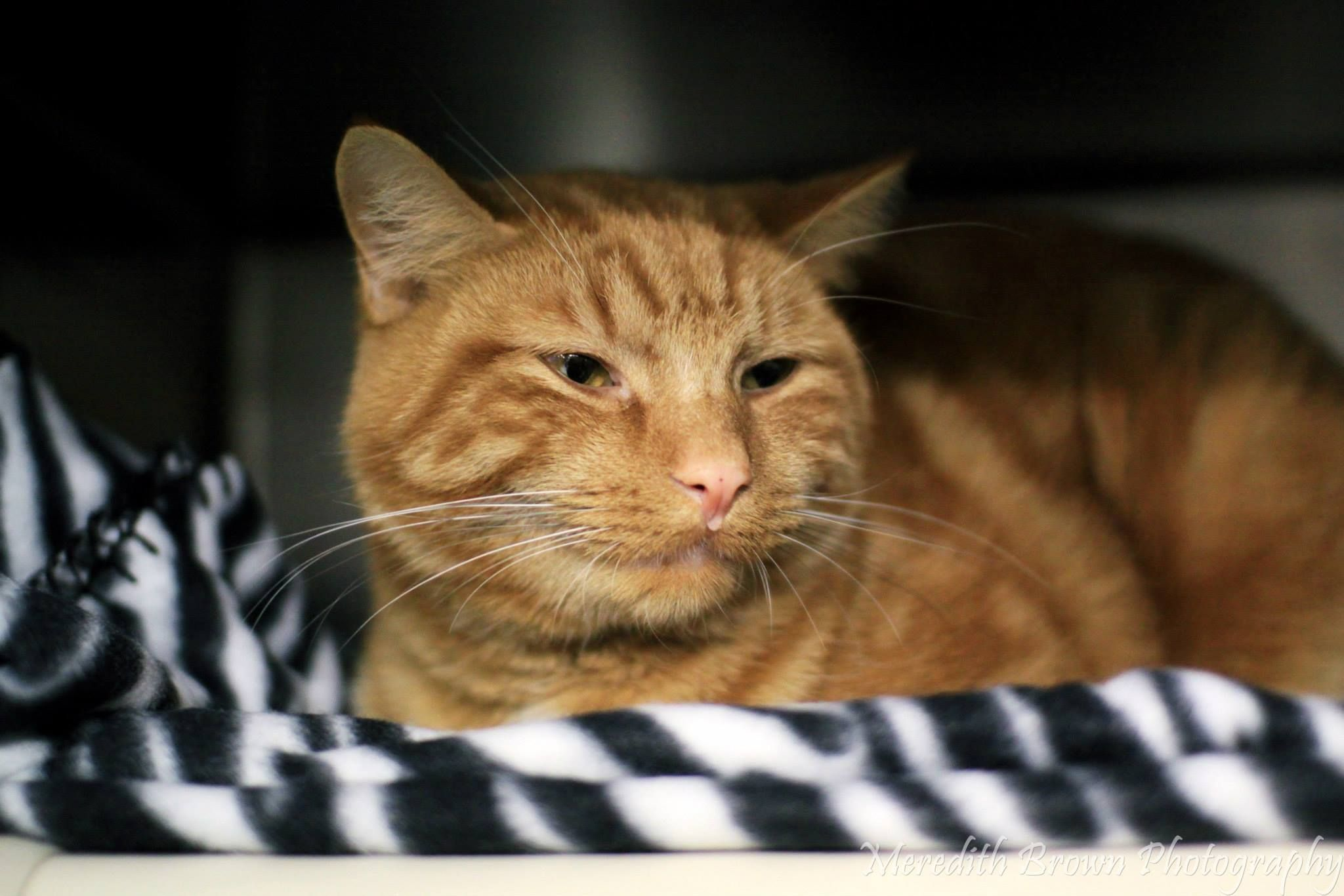 4721 This boy arrived at the shelter as a stray and would