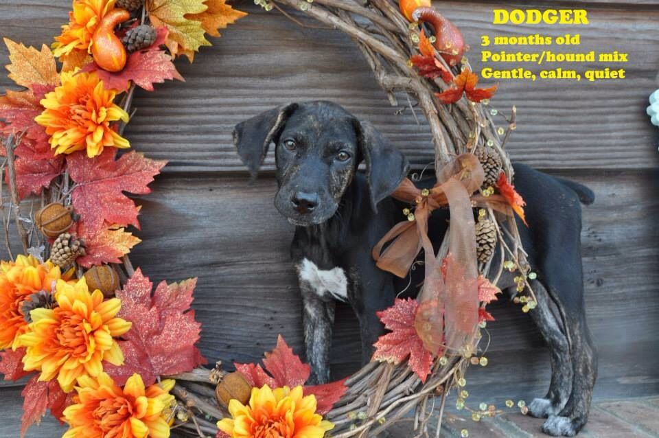 10+ Animal shelters in mississippi ideas