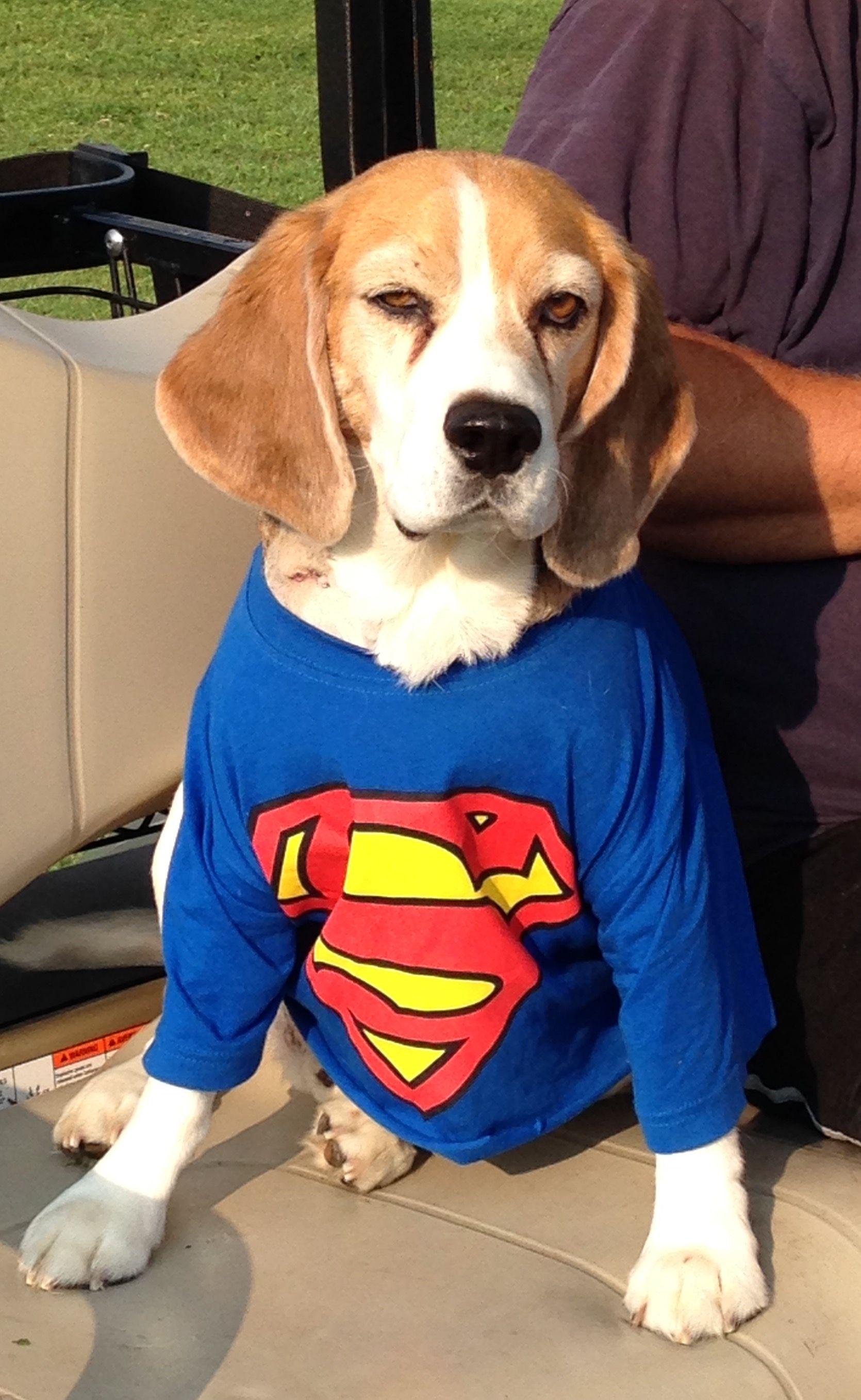 Austin super beagle