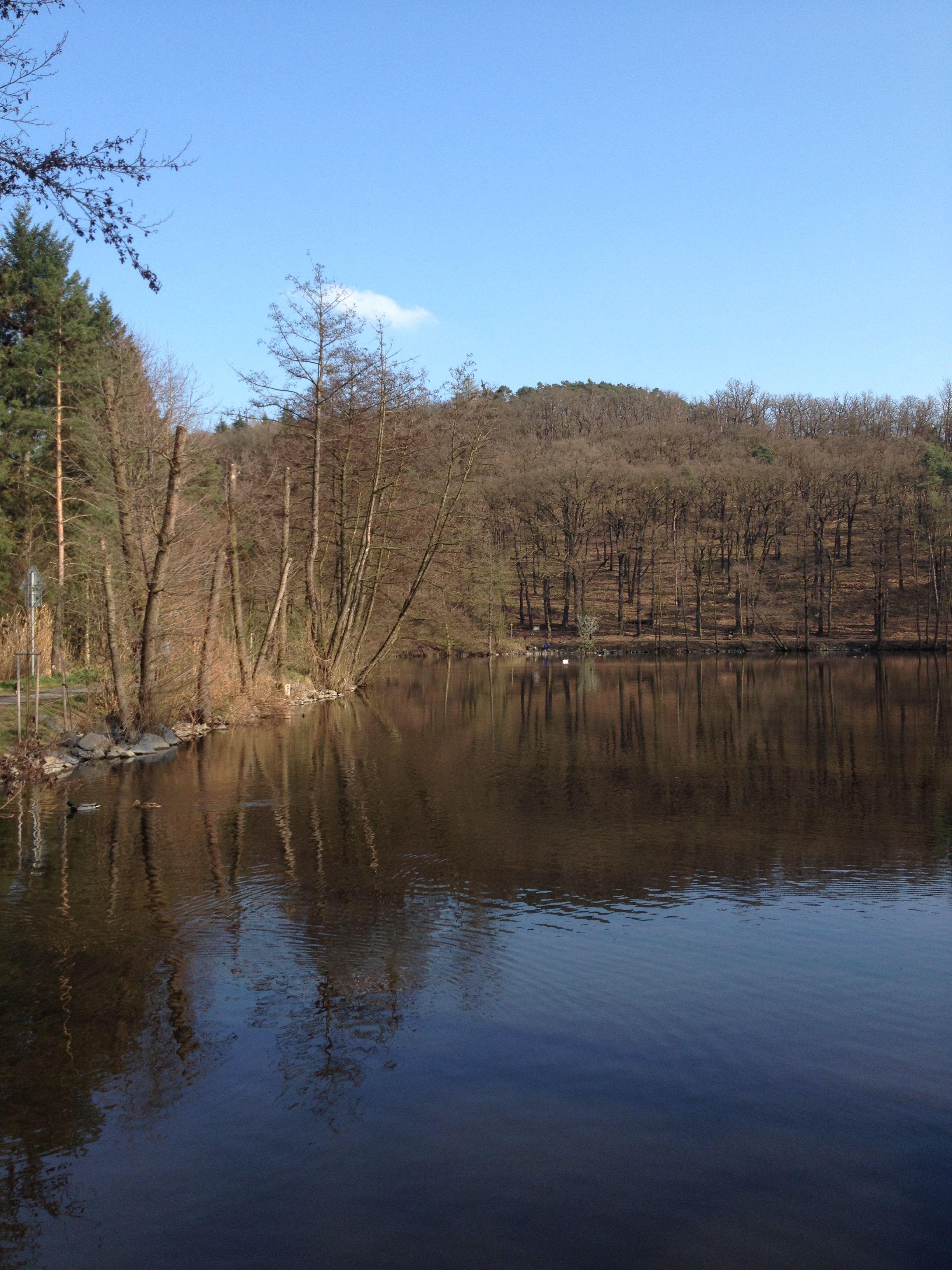 En mi barrio había un bosque - Kunratický les, era muy amplio y bonito. Y también había un estanque. Me gustaba mucho la naturaleza.