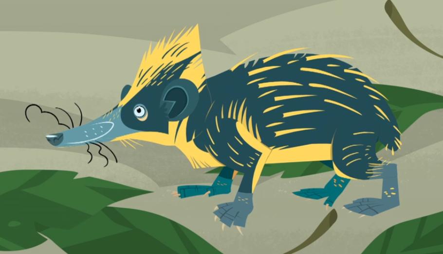 Lowland Streaked Tenrec In 2021 Animal Illustration Wild Kratts Lowland