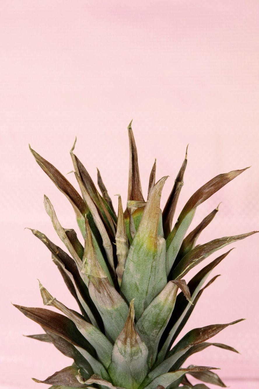 pink plant iphone wallpaper pineapple wallpaper flower