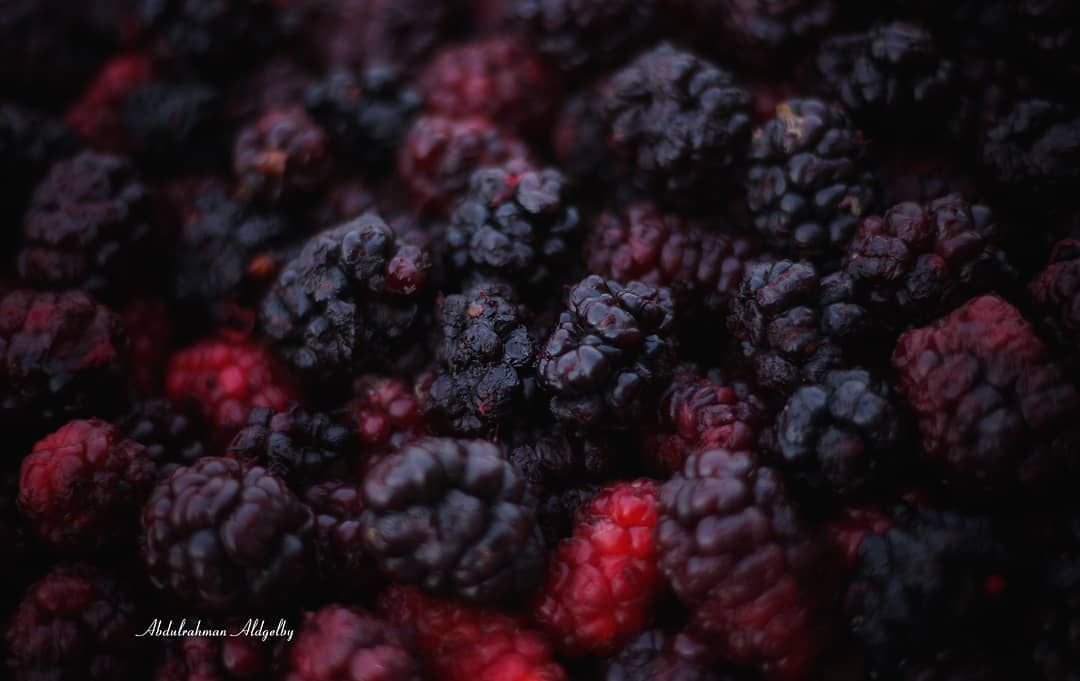 تصويري التوت الطائفي ويعتبر من أغلى الثمار الموسمية التي تشتهر بيها الطائف عبدالرحمن الدغيلبي السعودية الطائف مرشد سياحي مو Blueberry Fruit Food