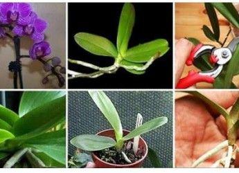 Il Nous Revele Tous Ses Secrets Pour Faire Refleurir Une Orchidee