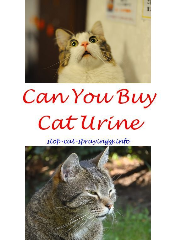 How To Remove Cat Urine From Carpet With Baking Soda Www