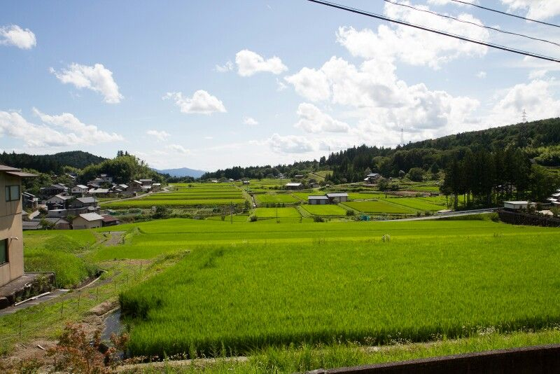 Japan, grasvelden