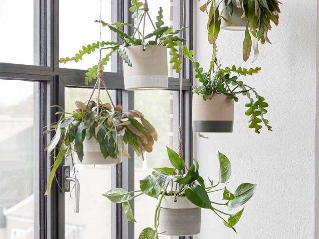 10 id es d co pour vos plantes suspendu pots et brise vue fenetre. Black Bedroom Furniture Sets. Home Design Ideas