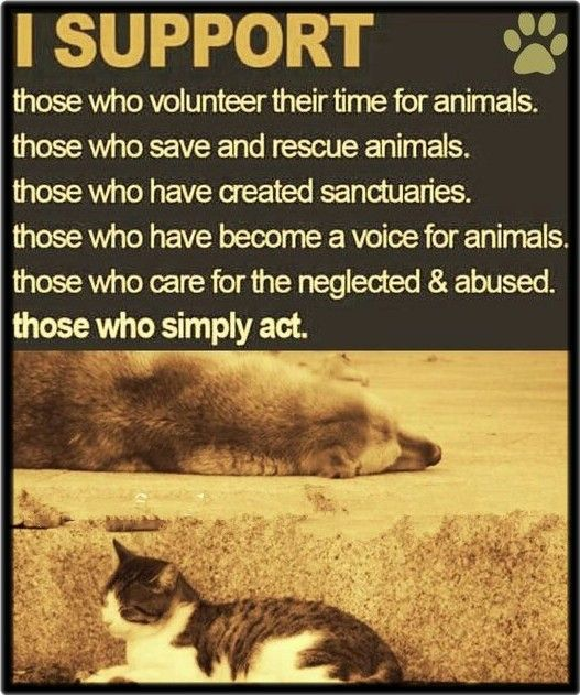 I Support Those Who Volunteer Their Time For Animals Those Who Save And Rescue Animals Those Who Have Created Sanctuaries Animal Rescue Animals Dogs
