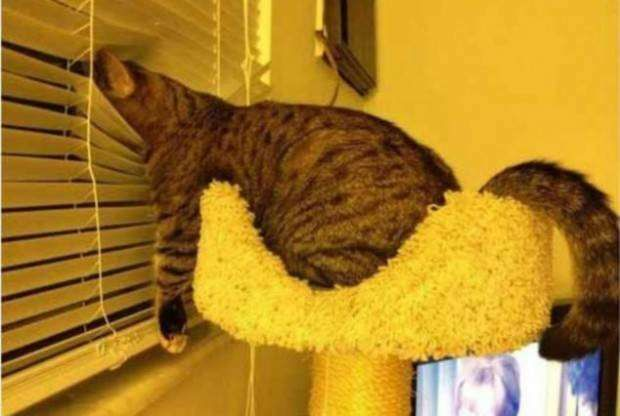 25 Cats Napping In Places That Don't Even Seem Possible. #4 Does NOT Seem Safe - Dose - Your Daily Dose of Amazing