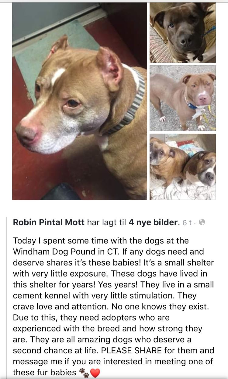 1/27/19 🙏🙏🙏 ️PLEASE HELP THESE WONDERFUL DOGS AT WINDHAM
