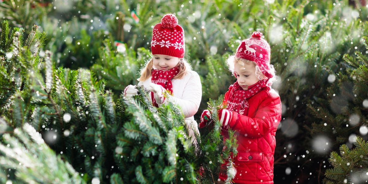 30 Best Christmas Tree Farms Near You For Your Annual Holiday Road Trip Christmas Tree Farm Cool Christmas Trees Christmas Traditions Family
